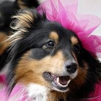 Гороскоп собаки